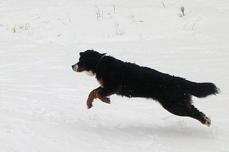 Chasing snowballs march 2005 (3).jpg
